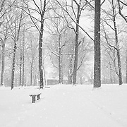 Heavy flakes blanket God's Acre in snow. Perfectly quiet and just the way I like it.