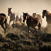 Moving the Remunda, CM Ranch, Wyoming,