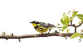 North American Birds Meet Your Neighbours