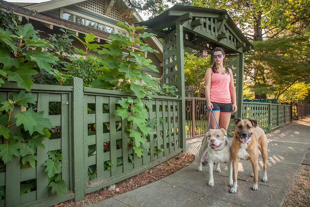 Bio-med tech and twenty year resident of Calistoga Alison Mutz is out for a walk with her dogs, Shelby and Thore, on Cedar Street.
