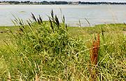 Summer landscape view overlooking River Deben tidal estuary, Sutton, Suffolk, England, UK