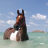 Horse at the beach