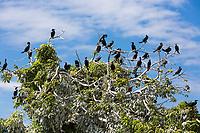 Cormorant birds of las isletas de Granada Nicaragua lake