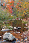 Autumn colors reflect in the gentle flow of Oak Creek's West Fork.