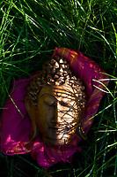 Still Life Photography. buddha chill