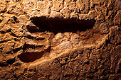 Australian Fossil Footprints the detail