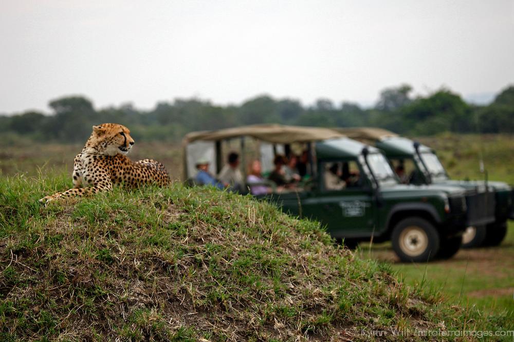 Africa, Kenya, Masai Mara. Watching a cheetah watching the plains.
