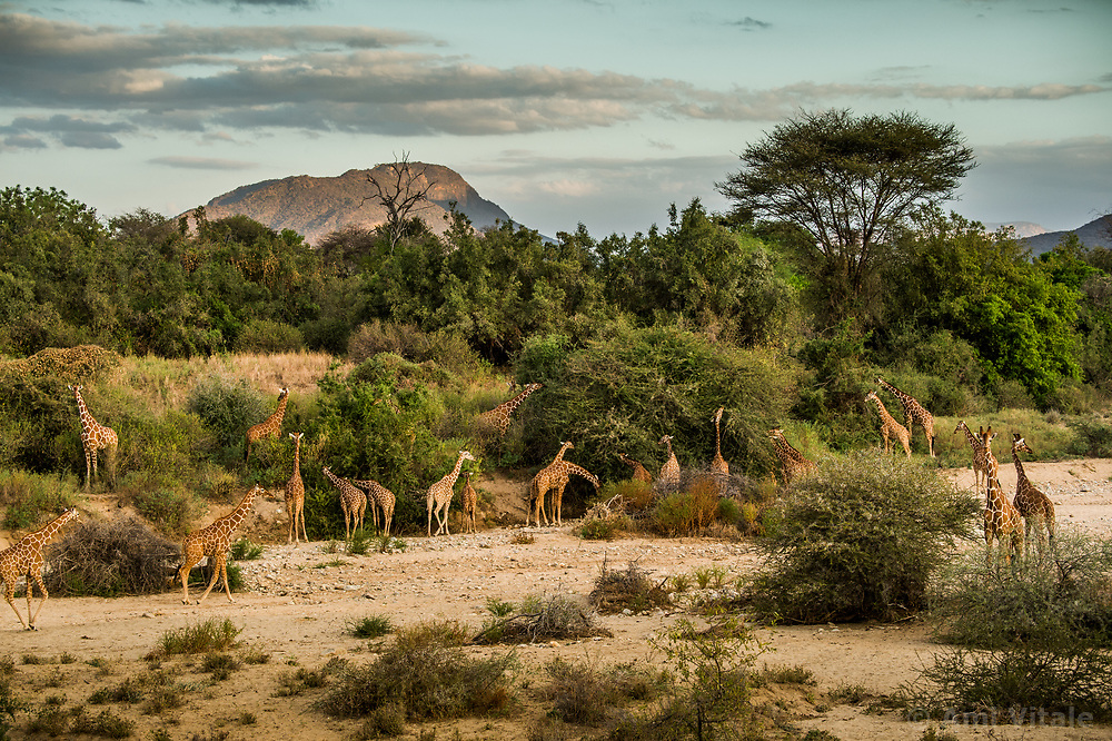Sarara camp, part of the Namunyak Community Conservancy in Northern Kenya, (Photo by Ami Vitale)