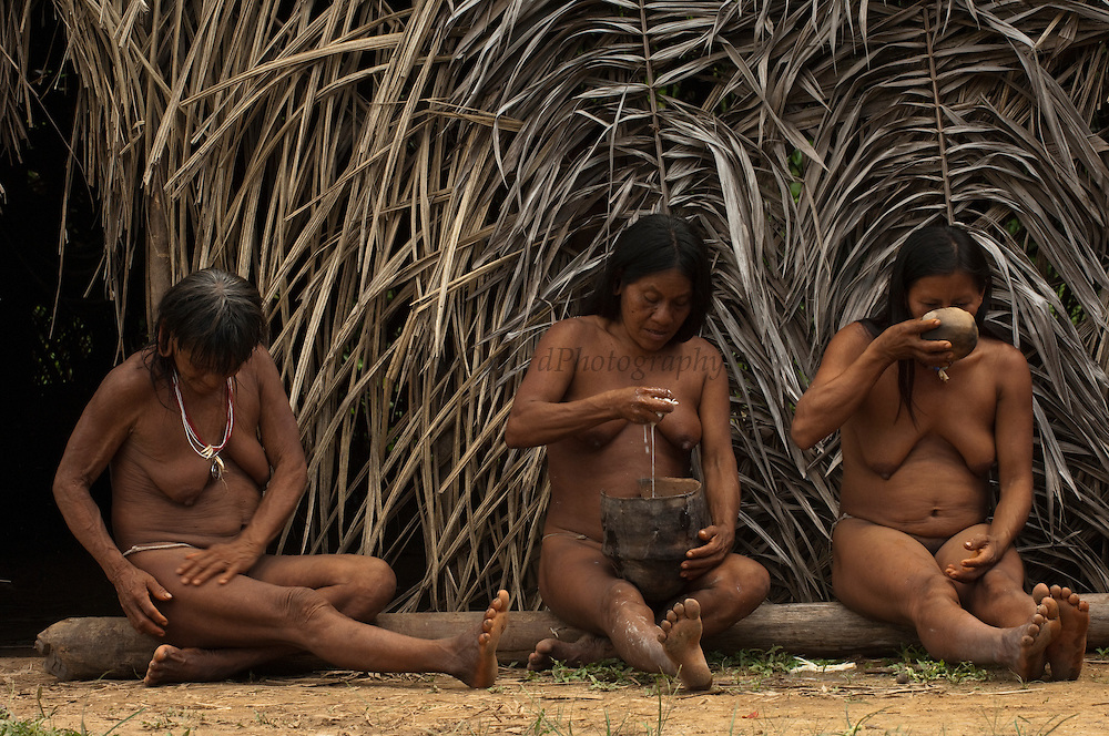 Huaorani women, Me&ntilde;emo Bopoga, Awame Gomoke &amp; Ewa Kemperi drinking chicha. This local brew is made from yuca. The woman chew it and then spit it into a bowl for fermenting. The alcohol content depends on the number of days it has been brewing.<br /> Bameno Community. Yasuni National Park.<br /> Amazon rainforest, ECUADOR.  South America<br /> This Indian tribe were basically uncontacted until 1956 when missionaries from the Summer Institute of Linguistics made contact with them. However there are still some groups from the tribe that remain uncontacted.  They are known as the Tagaeri &amp; Taromenane. Traditionally these Indians were very hostile and killed many people who tried to enter into their territory. Their territory is in the Yasuni National Park which is now also being exploited for oil.