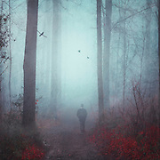 Man walking on a forest hike in the fog