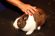 Luke, an american rabbit, gets attention from gail McCreight of Troy during the 2013 Boonshoft Gala at the Boonshoft Museum of Discovery in Dayton.  The theme, Hip to be Square, is reflected in exhibits and demonstrations during the evening.