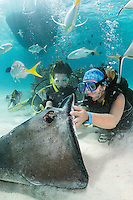 "Divers interact with Southern Stingrays at the famous dive site, ""Stingray City""<br /> <br /> Shot in Cayman Islands"