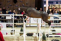 092, Charisto vd Heffinck<br /> Hengstenkeuring BWP - Lier 2019<br /> © Hippo Foto - Dirk Caremans<br /> 18/01/2019