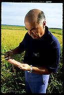 Erico Ribeiro, world's largest rice grower, studies grains of rice on Rio Grande do Sul farm. Brazil