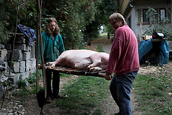 CZECH REPUBLIC VYSOCINA NEDVEZI 25SEP15 - Pig slaughter and portioning at a farmstead in Nedvezi, Vysocina, Czech Republic.<br /> <br /> Pig slaughter is a tradition known in numerous European countries.<br /> <br /> <br /> <br /> jre/Photo by Jiri Rezac<br /> <br /> <br /> <br /> © Jiri Rezac 2015