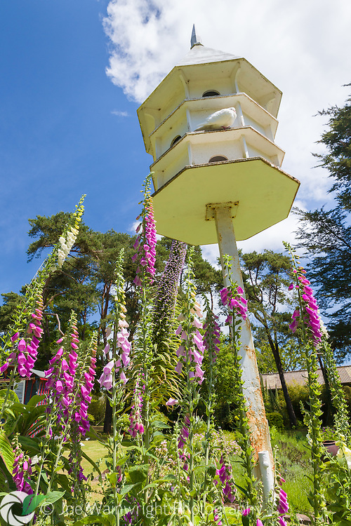 A dovecote, photographed in bright, June sunshine at Jersey Lavender, St. Brelade