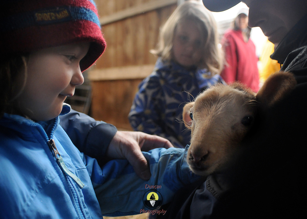 3/25/12 -- BRUNSWICK, Maine. A boy (brought to the event by his grandmother - not wanting name published) enjoys Lamb Day at Crystal Spring Farm.  Photo by Roger S. Duncan.