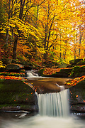 Small river in a colorful autumn forests