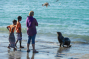Visitors to the Struisbaai Harbour watching a Cape Fur Seal, Struisbaai Harbour, Struisbaai, Western Cape, South Africa