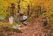 bear on toilet in woods
