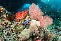 Soft Corals and Gorgonians thriving under the submerged arches at Bo'o Windows, Raja Ampat<br /> <br /> Shot in Indonesia