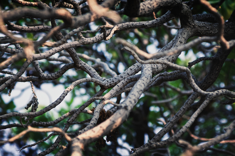 Tree branches deceptively posing as snakes.