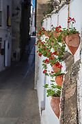 Geraniums, flowers, Spain; Arcos de la Frontera