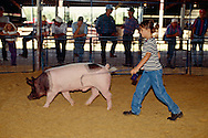 4H girl shows hog in county fair competition, Hobart Oklahoma, <br /> MODEL RELEASED