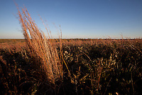 LITTLE BLUESTEM PRAIRIE