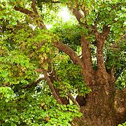 Taiwan Trees