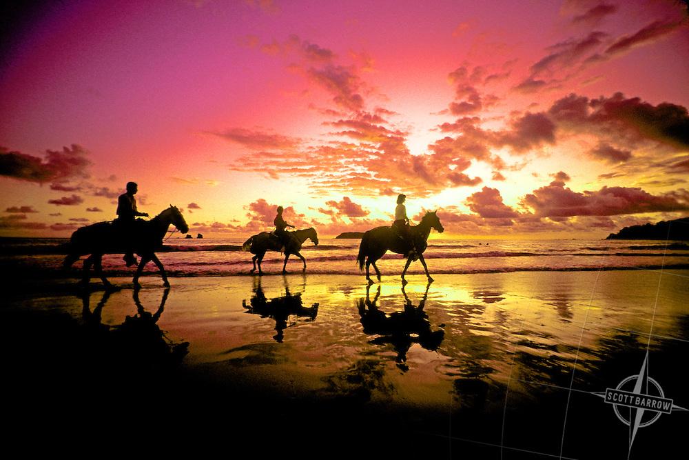 Description three horses on pink beach