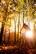 A female mountain biker riding in the woods on a colorful fall day.