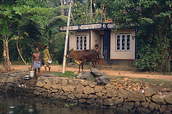 Backwaters of Kerala near Aleppey; India; with house; family and cow by the waterside,