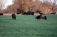 Wheat Pasture