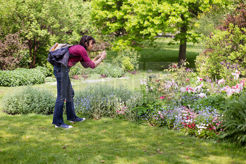 © Licensed to London News Pictures. 12/05/2016. LONDON, UK.  A woman photographs spring flowers during warm sunny weather in St James's Park at lunchtime.  Photo credit: Vickie Flores/LNP