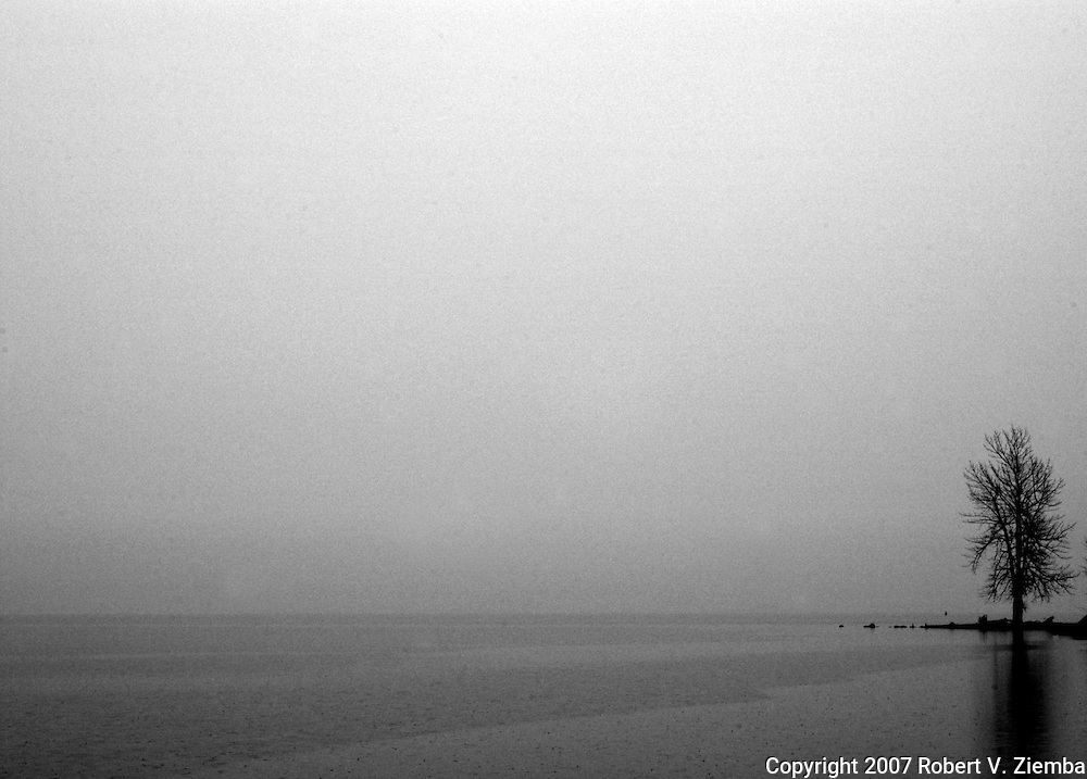 """Ausable Point(Alone)""-A minimal black and white image of a tree on Ausable Point jutting out into Lake Champlain in the foggy rain."