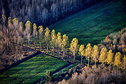 Netherlands - Picstory Autumn, also known as fall in America and Canada is one of the four temperate seasons. Autumn marks the transition from summer to winter, Autumn / Fall in the Netherlands. © raymond rutting