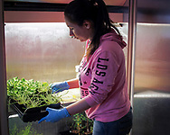 The Oklahoma State University Institute for Agricultural Biosciences (OSU-IAB) research initiative enables OSU to more effectively assist producers through the development of new or improved crops and crop production systems.