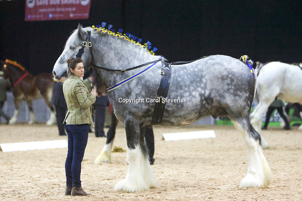 Mr K Tanner's MELINDWR GLAS-Y-DORLAN  (No.46)<br /> Sire  Moorfield Ted<br /> Dam  Clarach Modern Bell<br /> Breeder  Mr Alun Roberts<br /> 3rd  Stallions 4 years old