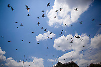 Pigeons fly over the Central Plaza as citizens take to the streets as a day of protest in connection with Guatemala's President Alvaro Colom fill the Central Plaza in Guatemala City May 17, 2009. . Thousands of protesters took to the streets of the capital  Sunday in two separated rival marches, one in support of the President and one denouncing President Alvaro Colom who was accused this week of murder, money laundering and having ties with narco-traffickers.(Darren Hauck)