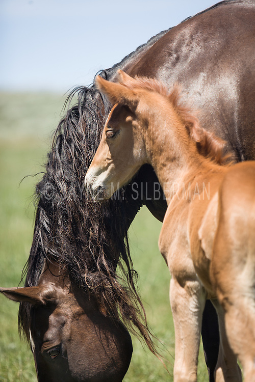 A foal stays close to his mother in this large psature.