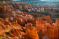 LOOKING EAST INTO THE SUNRISE ILLUMINATING THE HOODOOS WITH THE GOLDEN NECTAR!