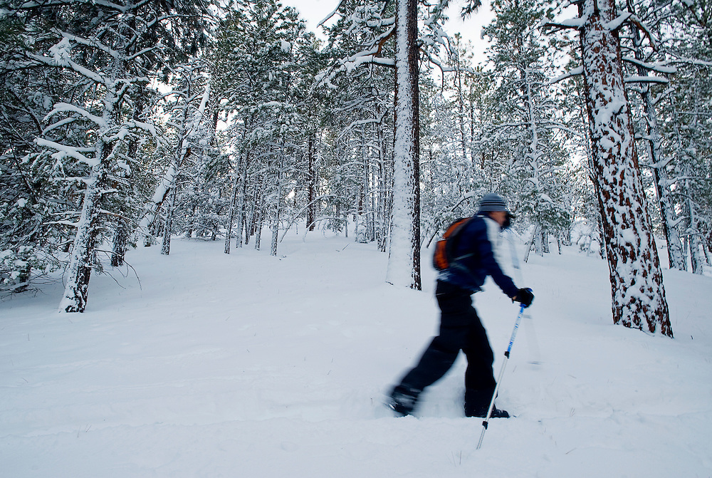 120809    Brian Leddy.Alfred Acevedo glides past a section of untouched forest near McGaffey late Monday afternoon on his cross country skis. Acevedo and others took advantage of the first significant snowfall of the season    to begin the winter season in the Zuni Mountians...