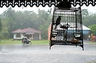 Rainning in Khao Lak, Thailand