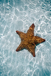 Generic Image of a starfish in clear, shallow water.