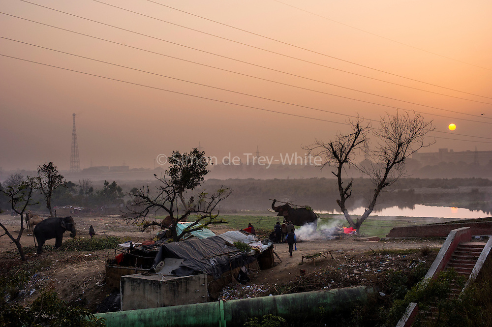 13th Jan 2015, Yamuna River, New Delhi, India. A view of the elephant handlers camp by the Yamuna River at dusk, New Delhi, India on the 13th Jan 2015<br />