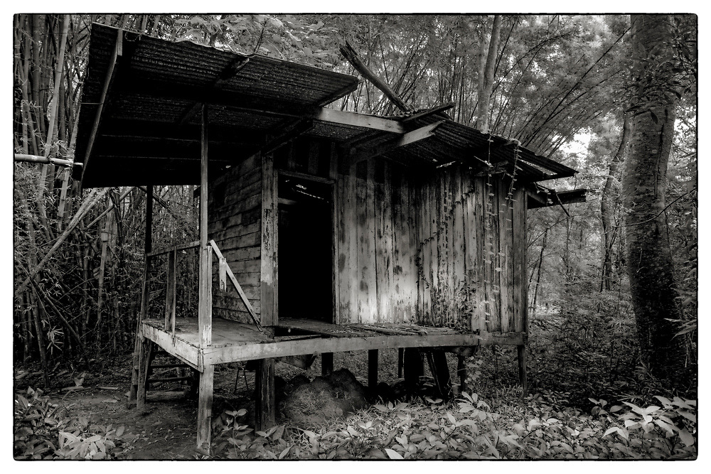 "An exterior view of an abandoned Monk's meditation hut set within a dense bamboo forest, in the grounds of the Pha Koeng Buddhist temple, Chaiyaphum Province, Northeast Thailand, 2016. From the series: ""Pha Koeng"" (2013-2017). (2011-2017)."