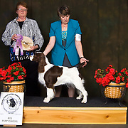 Wisconsin English Springer Spaniel Association 2010 Specialty and Obedience Trial | Show. All dogs participating in this event were of the  English Springer Spaniel breed.