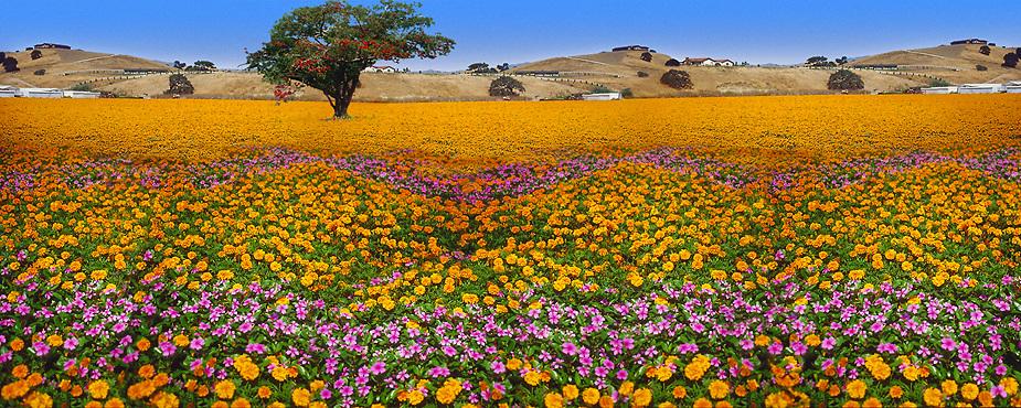 Flowers landscape field multiple america american usa united flowers landscape field multiple america american usa united states mightylinksfo