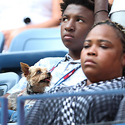 Serena William's dog, Chip, makes an appearance in her box.<br /> <br /> S. Williams d. K. Bertens 7-6(5), 6-3